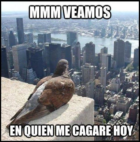memes de animales chistosos95 100 Memes de Animales Graciosos