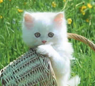 imagenes de gatos para perfil whatsapp10 Imágenes de Gatos para Perfil de Whatsapp