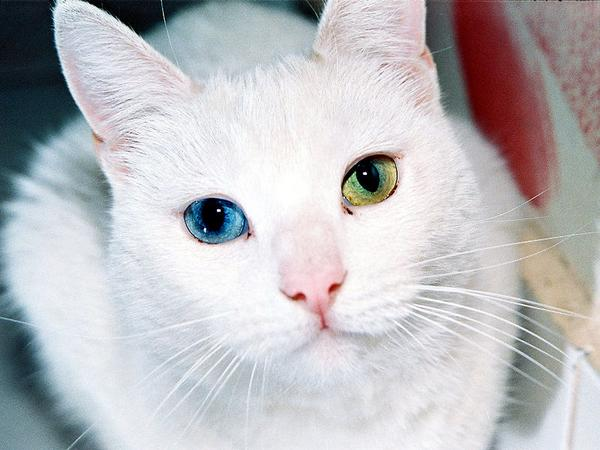 imagenes de gatos para perfil whatsapp11 Imágenes de Gatos para Perfil de Whatsapp