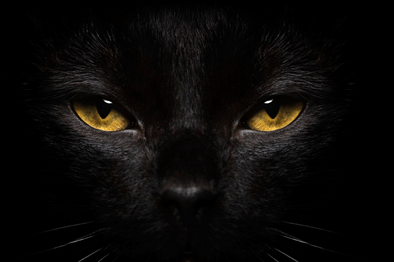 imagenes de gatos para perfil whatsapp12 Imágenes de Gatos para Perfil de Whatsapp