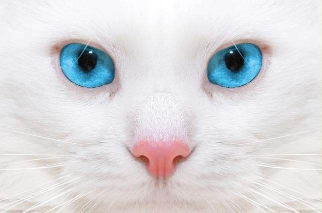 imagenes de gatos para perfil whatsapp13 Imágenes de Gatos para Perfil de Whatsapp
