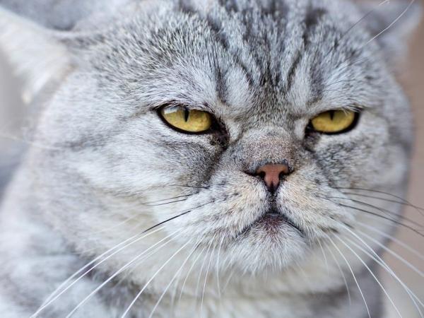 imagenes de gatos para perfil whatsapp14 Imágenes de Gatos para Perfil de Whatsapp