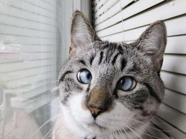 imagenes de gatos para perfil whatsapp16 Imágenes de Gatos para Perfil de Whatsapp