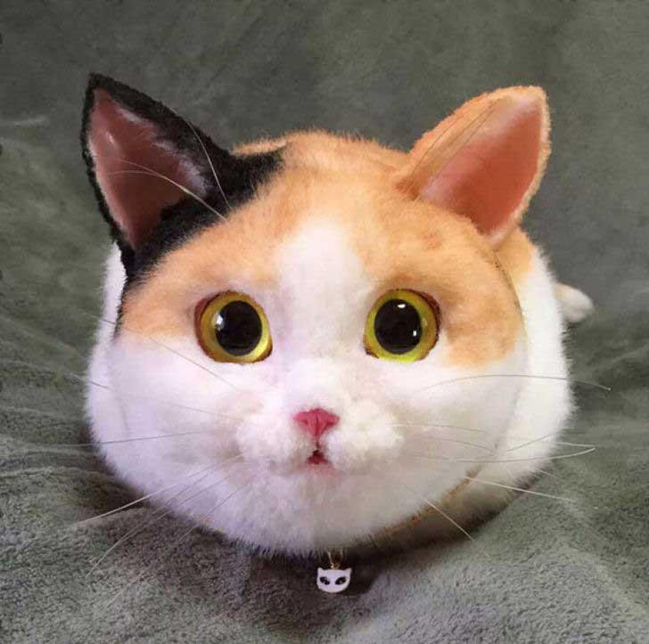 imagenes de gatos para perfil whatsapp19 Imágenes de Gatos para Perfil de Whatsapp