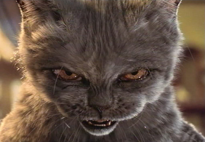 imagenes de gatos para perfil whatsapp22 Imágenes de Gatos para Perfil de Whatsapp