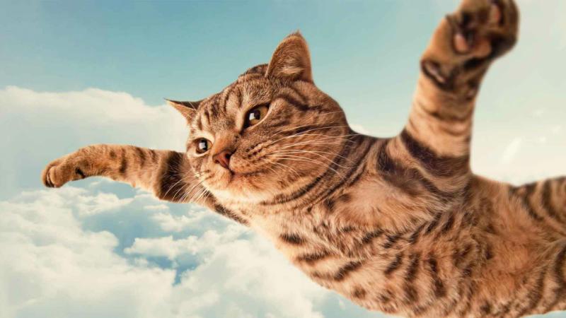 imagenes de gatos para perfil whatsapp23 Imágenes de Gatos para Perfil de Whatsapp