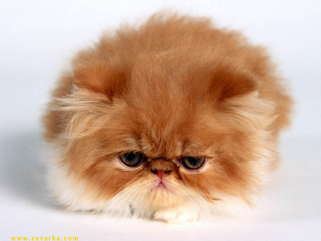 imagenes de gatos para perfil whatsapp25 Imágenes de Gatos para Perfil de Whatsapp