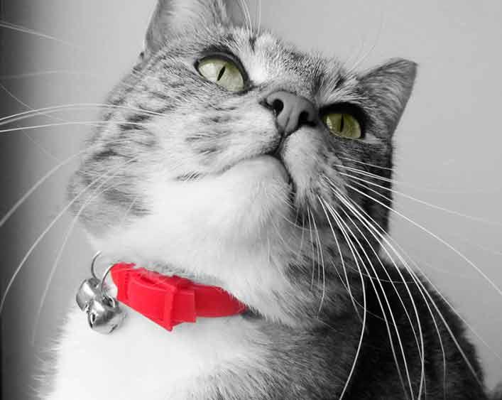 imagenes de gatos para perfil whatsapp29 Imágenes de Gatos para Perfil de Whatsapp