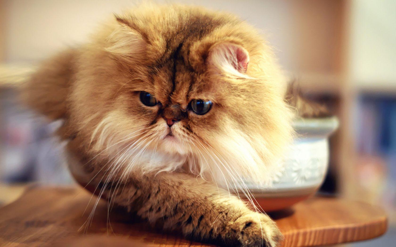 imagenes de gatos para perfil whatsapp3 Imágenes de Gatos para Perfil de Whatsapp