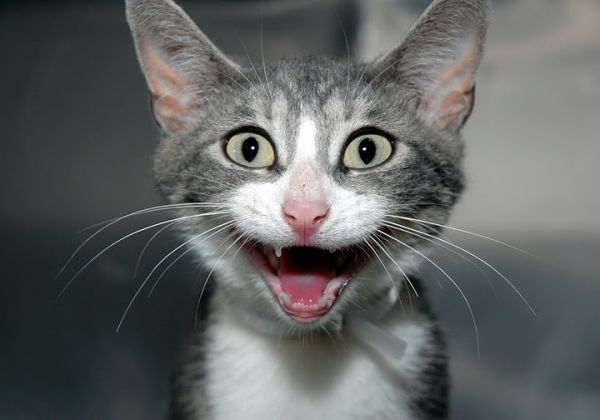 imagenes de gatos para perfil whatsapp30 Imágenes de Gatos para Perfil de Whatsapp