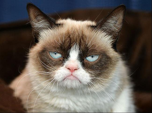 imagenes de gatos para perfil whatsapp31 Imágenes de Gatos para Perfil de Whatsapp