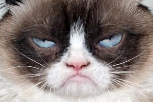 imagenes de gatos para perfil whatsapp32