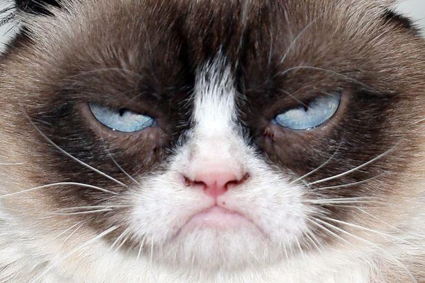 imagenes de gatos para perfil whatsapp32 Imágenes de Gatos para Perfil de Whatsapp