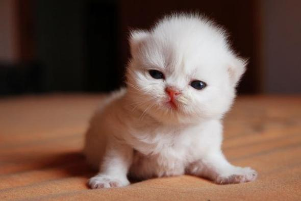 imagenes de gatos para perfil whatsapp5 Imágenes de Gatos para Perfil de Whatsapp