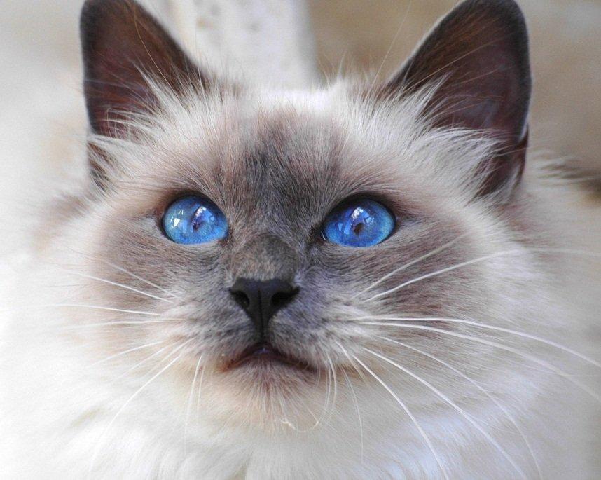 imagenes de gatos para perfil whatsapp7 Imágenes de Gatos para Perfil de Whatsapp