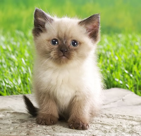 imagenes de gatos para perfil whatsapp8 Imágenes de Gatos para Perfil de Whatsapp