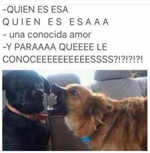fotos chistosas para Whatsapp pareja de perros graciosa 295x300 10 Imágenes Graciosas Animadas (GIF) + Fotos chistosas para Whatsapp