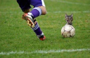 imagenes chistosas de futbol gato asustado 300x195 Imágenes Chistosas de Fútbol para Whatsapp