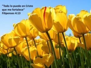 imagenes con frases de la biblia todo lo puedo en cristo 300x225 Imágenes con Frases de la Biblia para Whatsapp