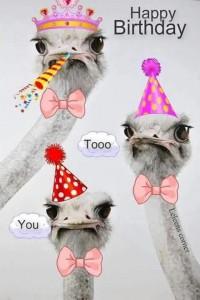imagenes de cumpleaños en ingles chistosa 200x300 Imágenes Cumpleaños en Ingles para Whatsapp