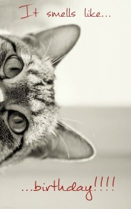 imagenes de cumpleaños en ingles gato happy birthday 188x300 Imágenes Cumpleaños en Ingles para Whatsapp