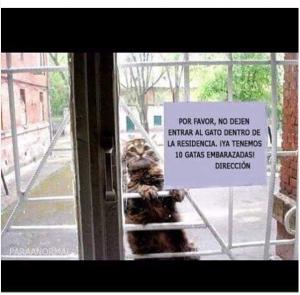 imagenes graciosas que te haran reir el gato 300x295 50 Imágenes Graciosas que te harán reír demasiado