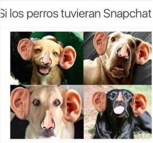 imagenes graciosas que te haran reir si los perros tuvieran snapchat 300x281 50 Imágenes Graciosas que te harán reír demasiado
