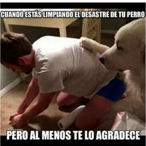 imagenes graciosas y divertidas consuelo de perro 300x300 80 Imágenes para Whatsapp Graciosas y Divertidas