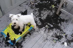 imagenes graciosas y divertidas perro foto chistosa 300x200 80 Imágenes para Whatsapp Graciosas y Divertidas