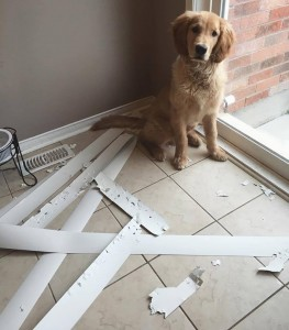 imagenes graciosas y divertidas travesuras de perros 263x300 80 Imágenes para Whatsapp Graciosas y Divertidas