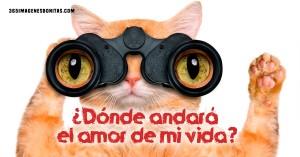 imagenes para whatsapp de amor gatito chistoso 300x157 45 Imágenes para Whatsapp de Amor (HD)