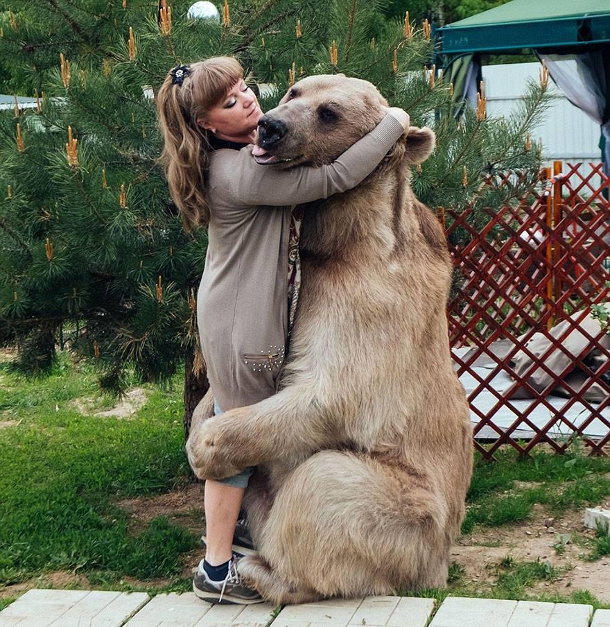 oso domesticado4 Conoce a Stepan! El Oso domesticado de una pareja hace 23 años
