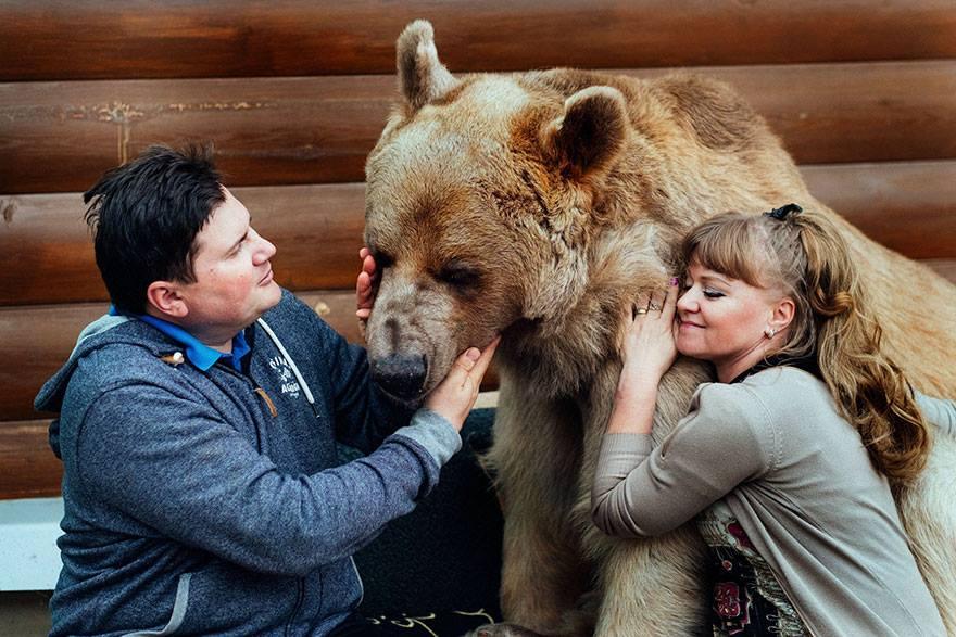 oso domesticado5 Conoce a Stepan! El Oso domesticado de una pareja hace 23 años