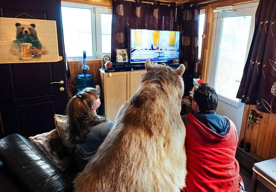 oso domesticado9 Conoce a Stepan! El Oso domesticado de una pareja hace 23 años