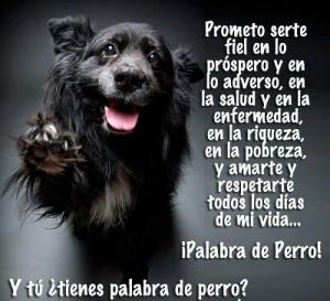 frases de lealtad mi perro 300x273 Imágenes con Frases de Lealtad para Whatsapp